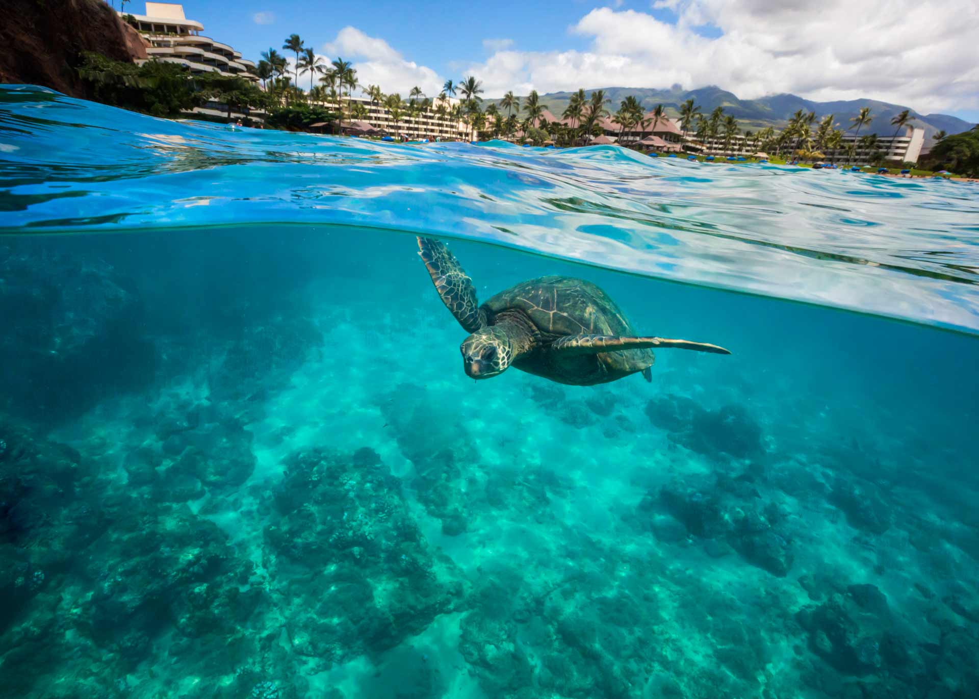 turtle in body of water