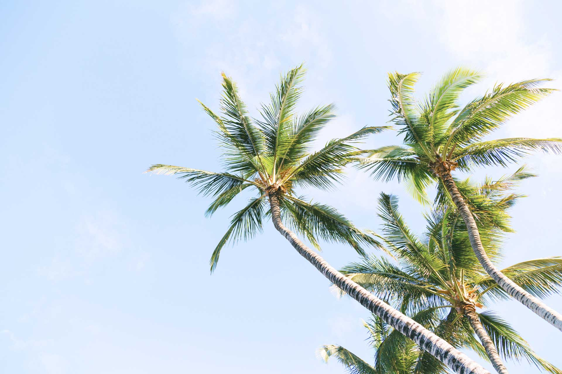 green coconut trees under white sky